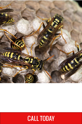 Pest Problem? | Get it solved in a hurry | Call Today